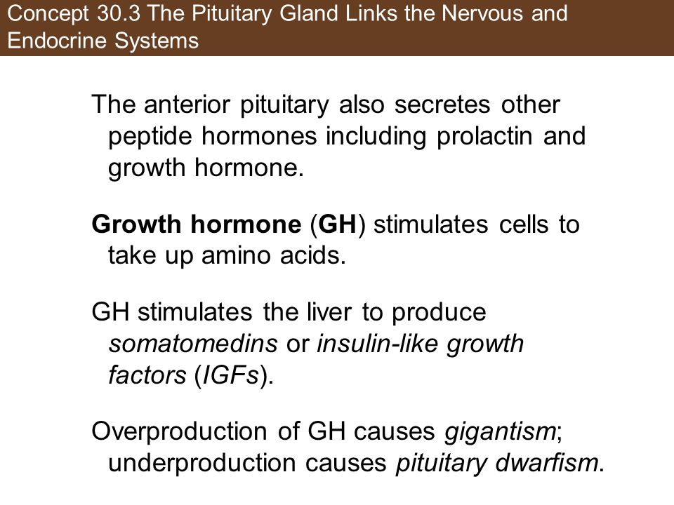 Growth hormone (GH) stimulates cells to take up amino acids.