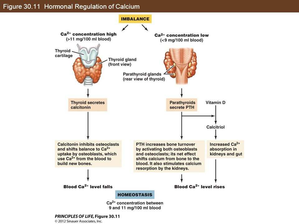 Figure 30.11 Hormonal Regulation of Calcium