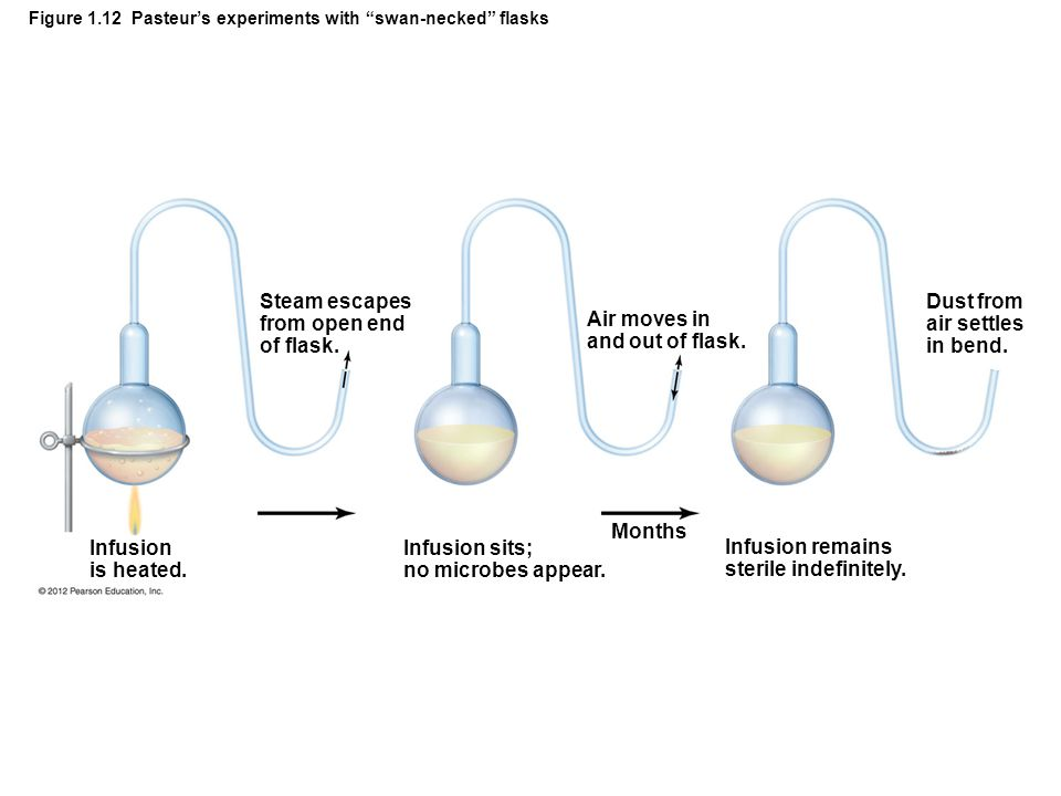 Figure 1.12 Pasteur's experiments with swan-necked flasks