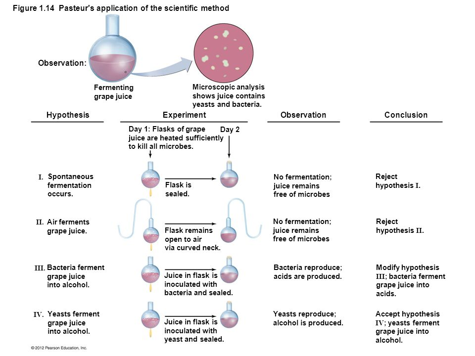 Figure 1.14 Pasteur s application of the scientific method