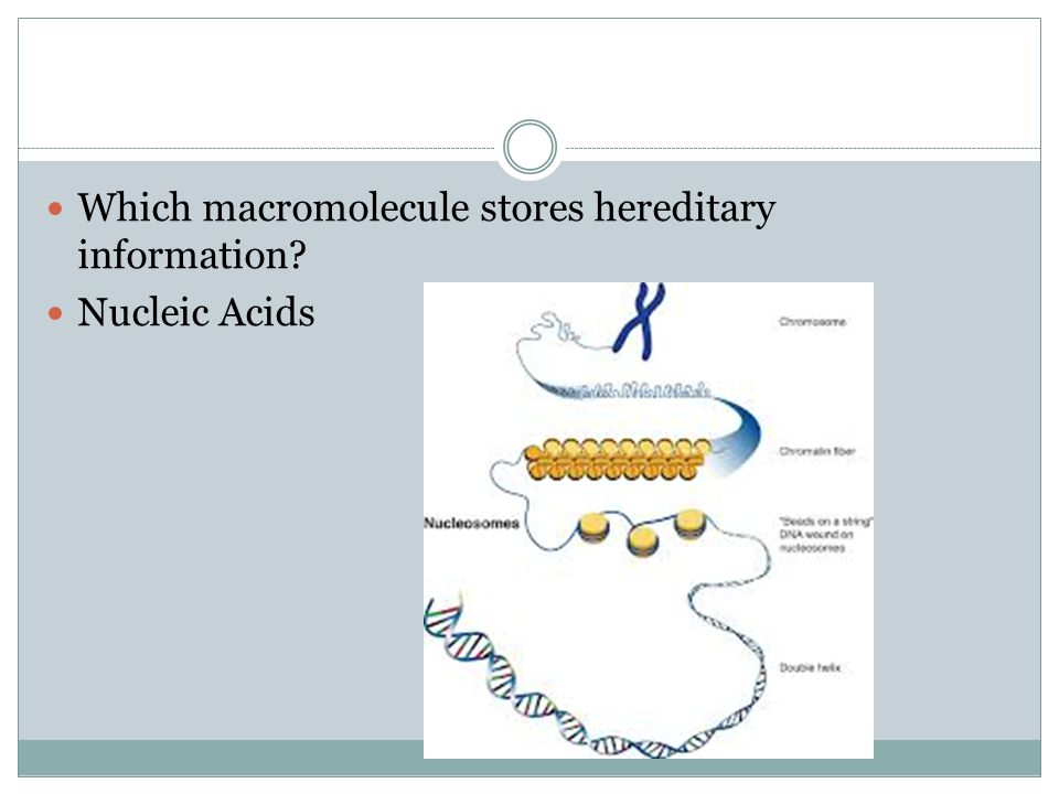 Which macromolecule stores hereditary information
