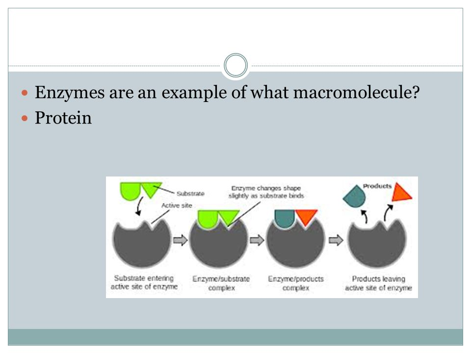 Enzymes are an example of what macromolecule