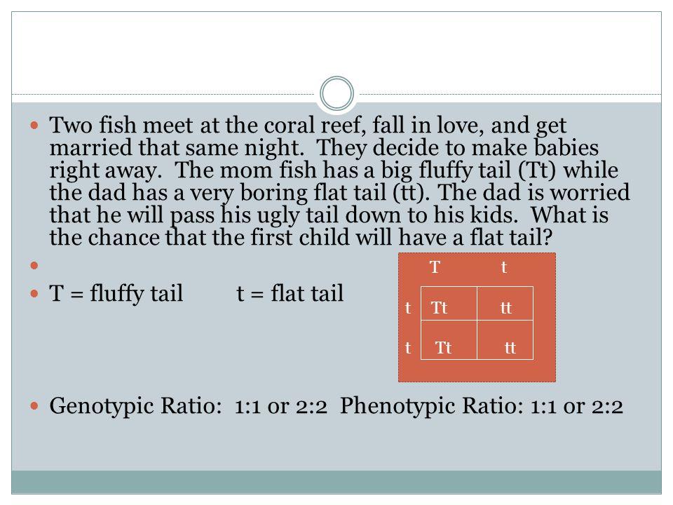 T = fluffy tail t = flat tail