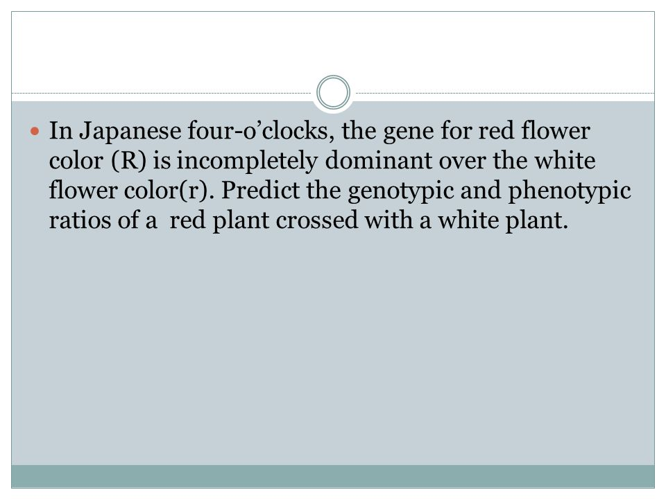 In Japanese four-o'clocks, the gene for red flower color (R) is incompletely dominant over the white flower color(r).