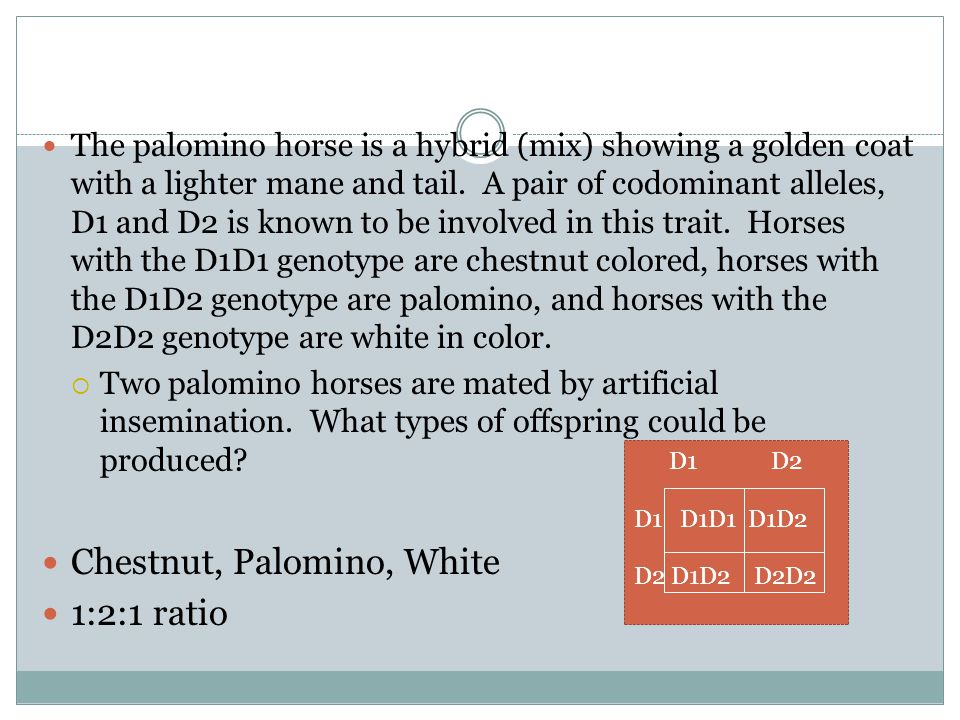 Chestnut, Palomino, White 1:2:1 ratio