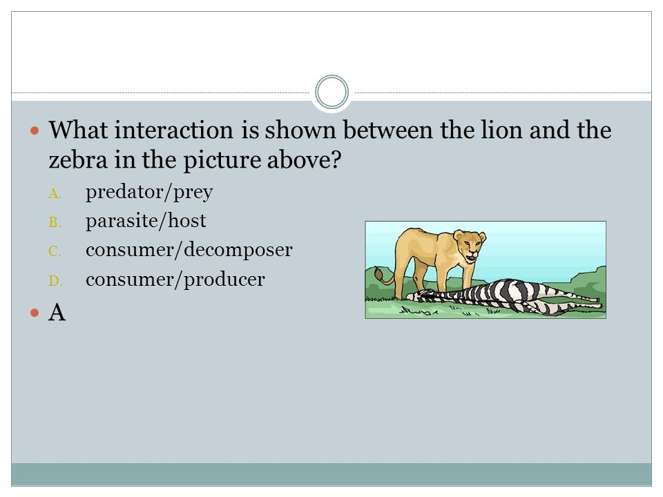 What interaction is shown between the lion and the zebra in the picture above
