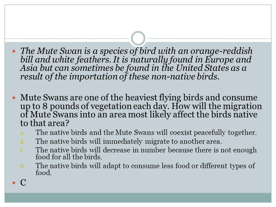 The Mute Swan is a species of bird with an orange-reddish bill and white feathers. It is naturally found in Europe and Asia but can sometimes be found in the United States as a result of the importation of these non-native birds.