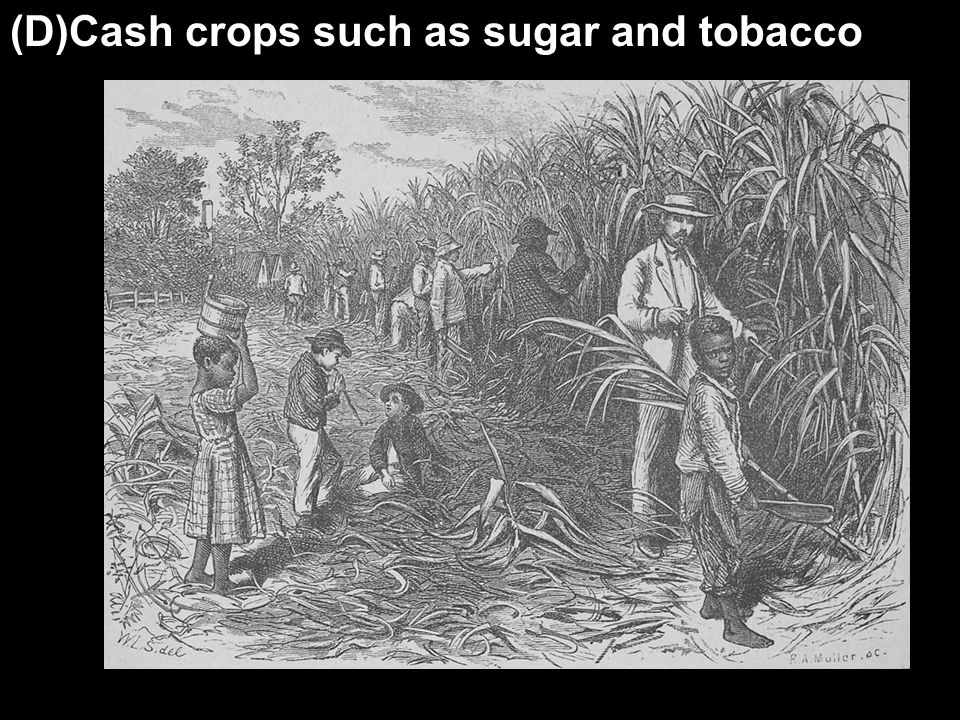 (D)Cash crops such as sugar and tobacco