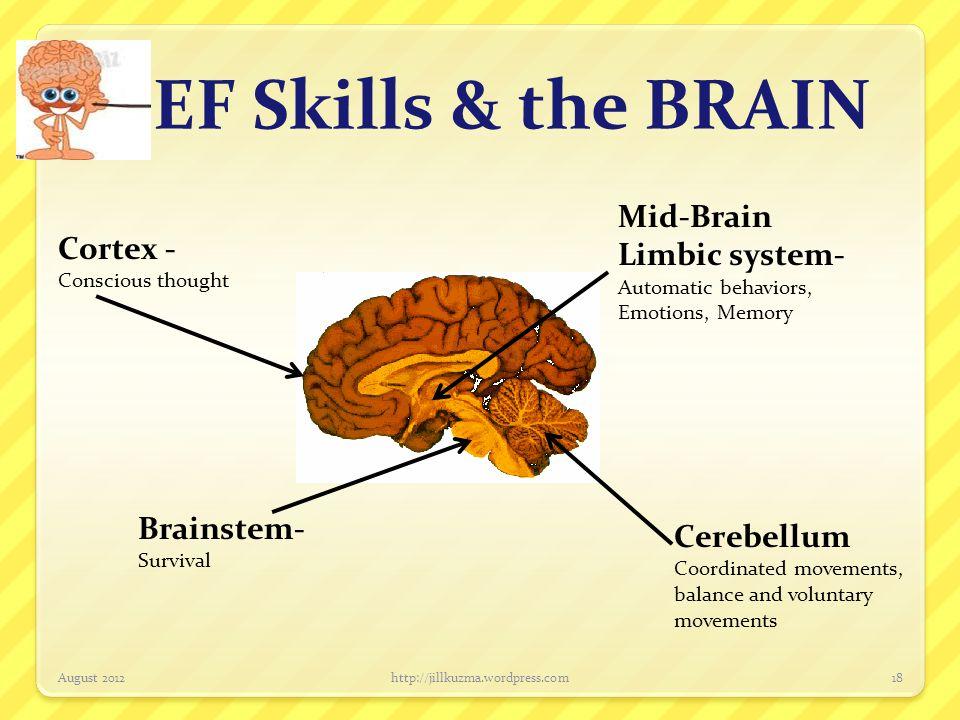 EF Skills & the BRAIN Mid-Brain Limbic system- Cortex - Brainstem-