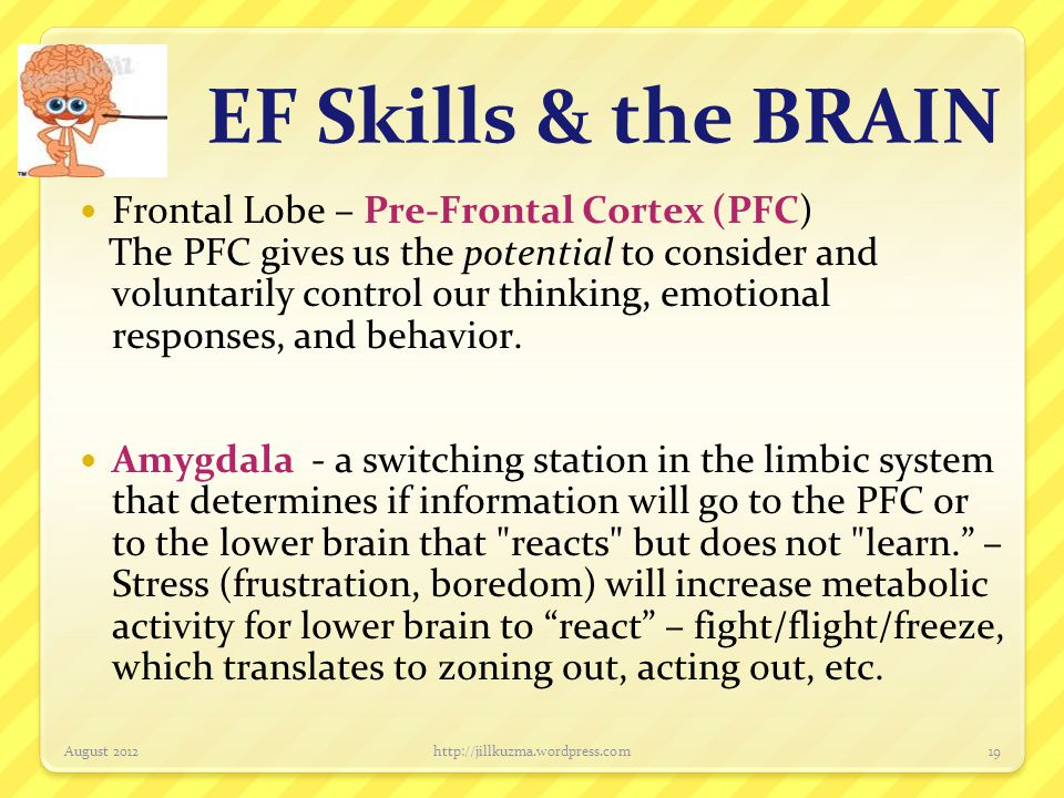 EF Skills & the BRAIN Frontal Lobe – Pre-Frontal Cortex (PFC)