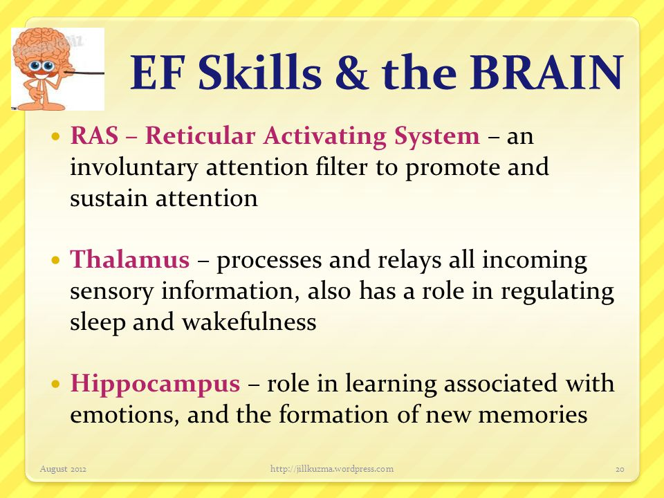 EF Skills & the BRAIN RAS – Reticular Activating System – an involuntary attention filter to promote and sustain attention.