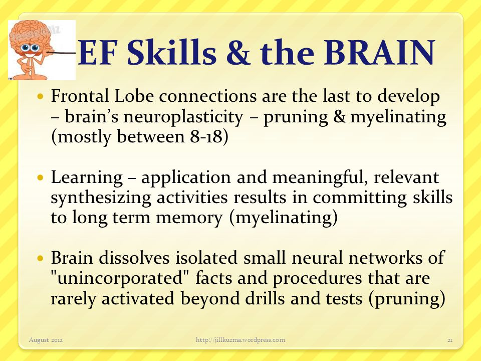 EF Skills & the BRAIN Frontal Lobe connections are the last to develop – brain's neuroplasticity – pruning & myelinating (mostly between 8-18)