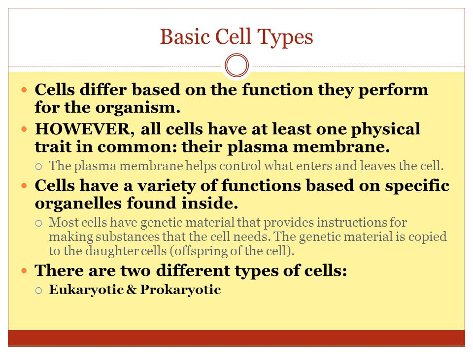Basic Cell Types Cells differ based on the function they perform for the organism.