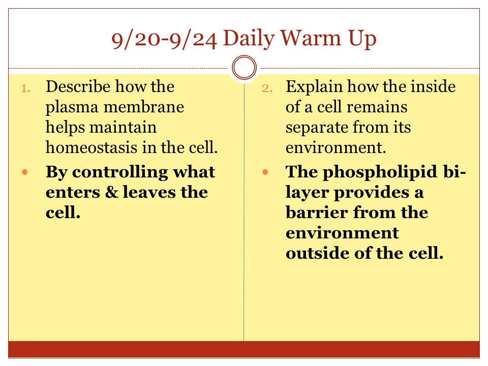 9/20-9/24 Daily Warm Up Describe how the plasma membrane helps maintain homeostasis in the cell. By controlling what enters & leaves the cell.