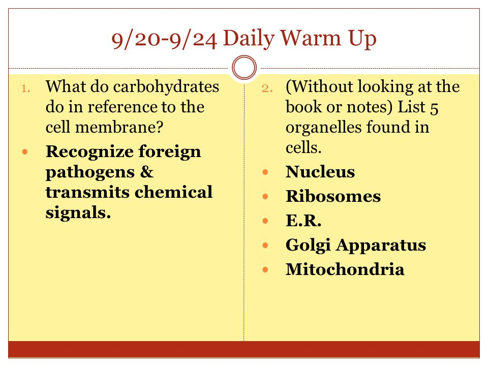 9/20-9/24 Daily Warm Up What do carbohydrates do in reference to the cell membrane Recognize foreign pathogens & transmits chemical signals.