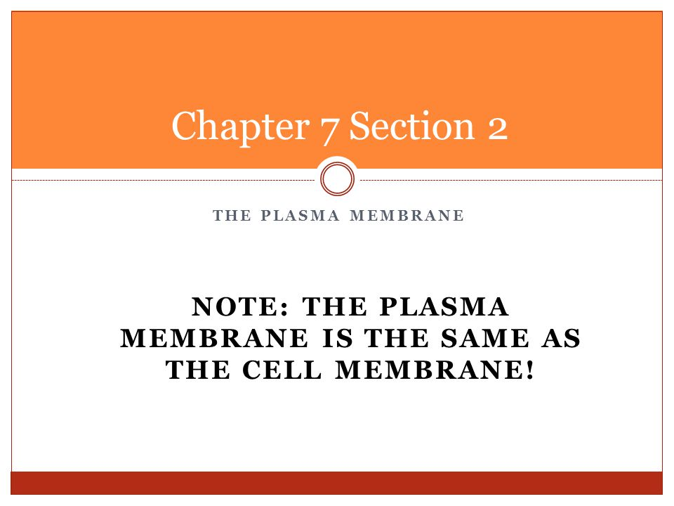 Note: The Plasma Membrane is the same as the cell membrane!