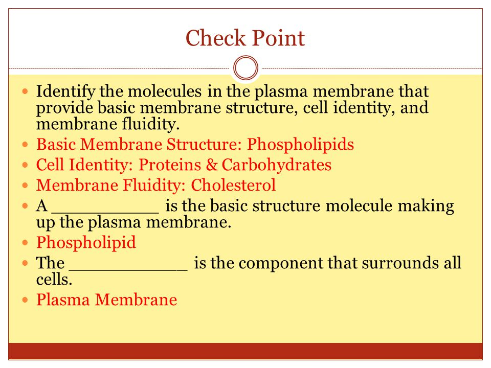 Check Point Identify the molecules in the plasma membrane that provide basic membrane structure, cell identity, and membrane fluidity.