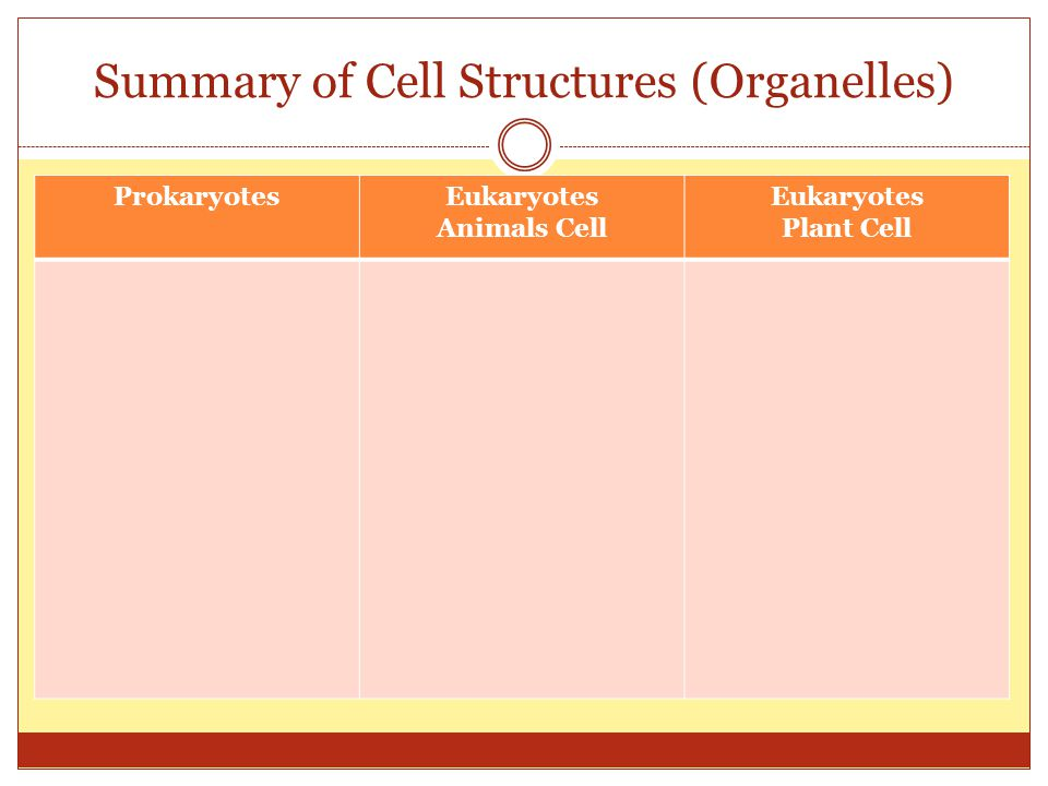 Summary of Cell Structures (Organelles)