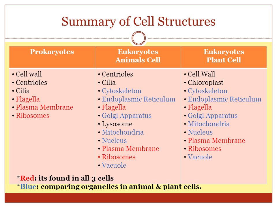 Summary of Cell Structures