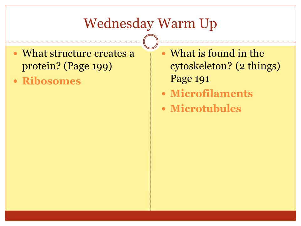 Wednesday Warm Up What structure creates a protein (Page 199)