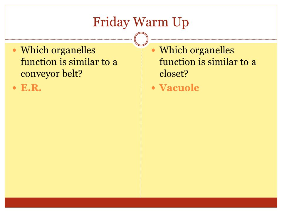 Friday Warm Up Which organelles function is similar to a conveyor belt E.R. Which organelles function is similar to a closet