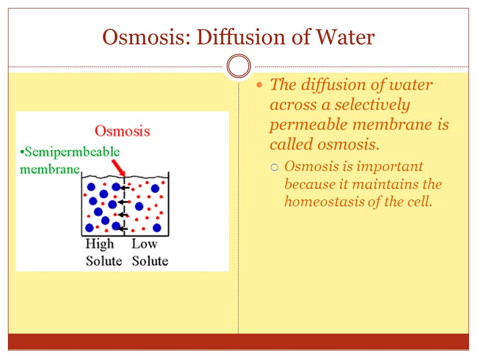 Osmosis: Diffusion of Water