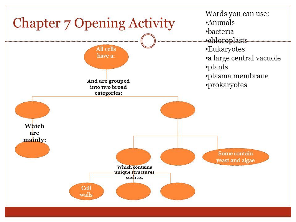 Chapter 7 Opening Activity