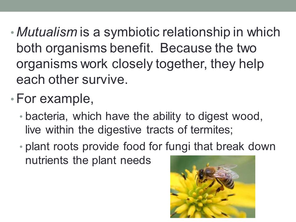 Mutualism is a symbiotic relationship in which both organisms benefit