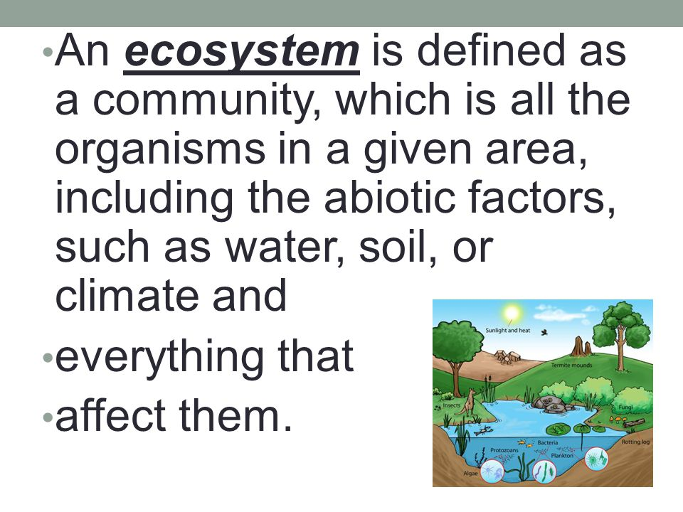 An ecosystem is defined as a community, which is all the organisms in a given area, including the abiotic factors, such as water, soil, or climate and