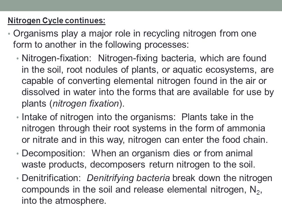 Nitrogen Cycle continues: