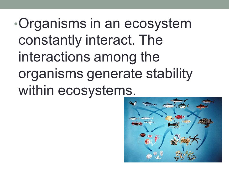 Organisms in an ecosystem constantly interact