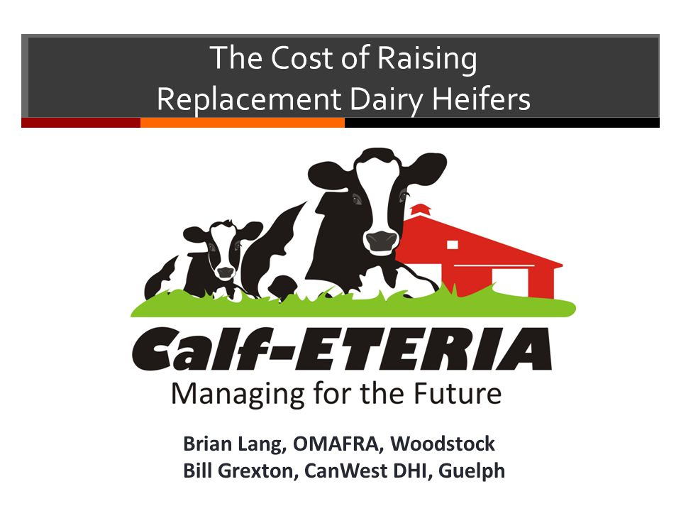The Cost of Raising Replacement Dairy Heifers