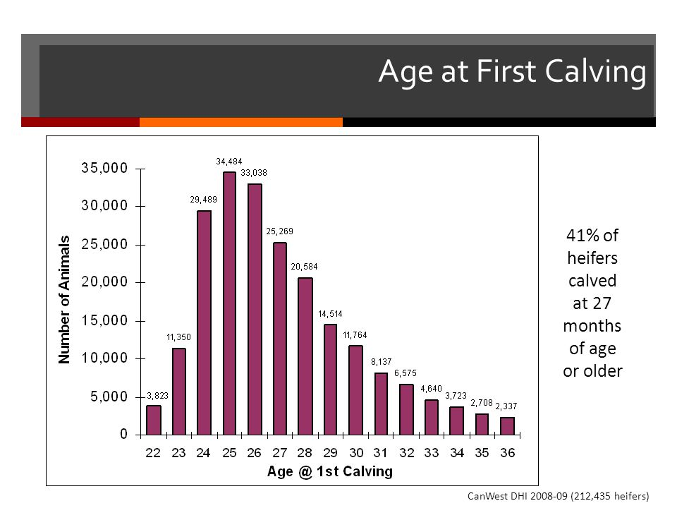 Age at First Calving 63% of heifers. 41% of heifers calved at 27 months of age or older.