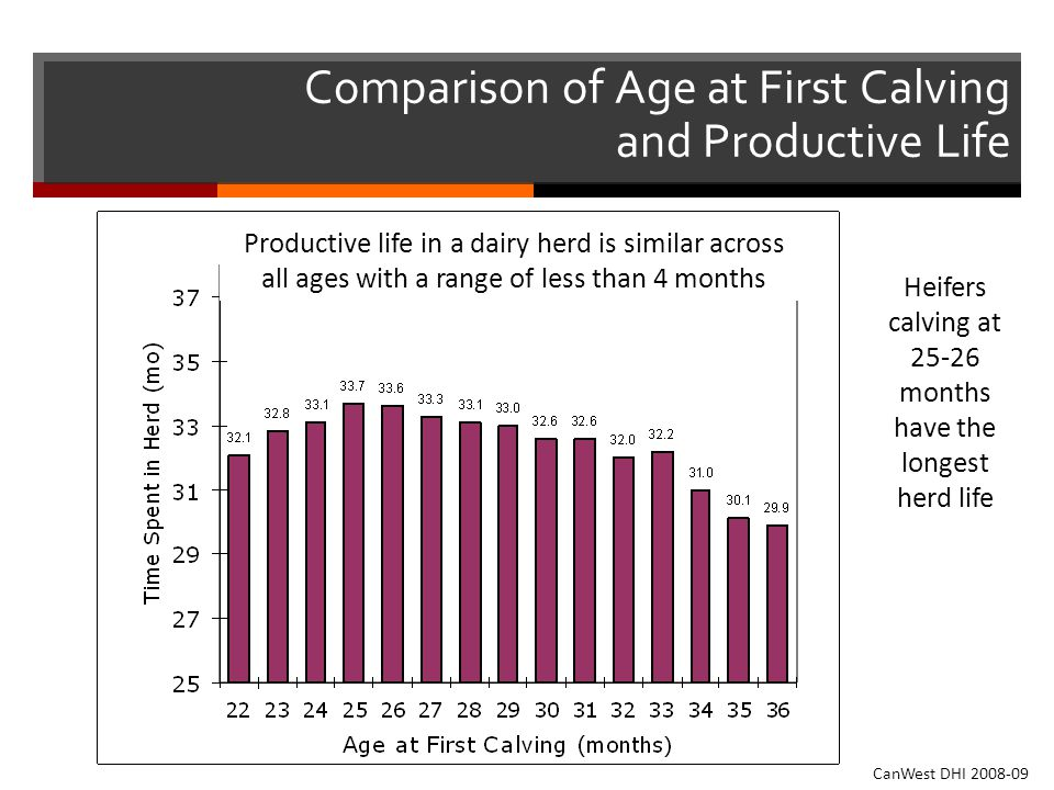 Comparison of Age at First Calving and Productive Life