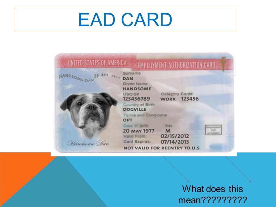 EAD CARD What does this mean