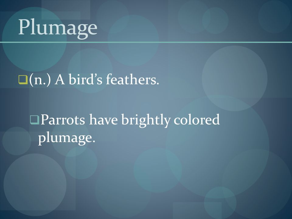 Plumage (n.) A bird's feathers. Parrots have brightly colored plumage.