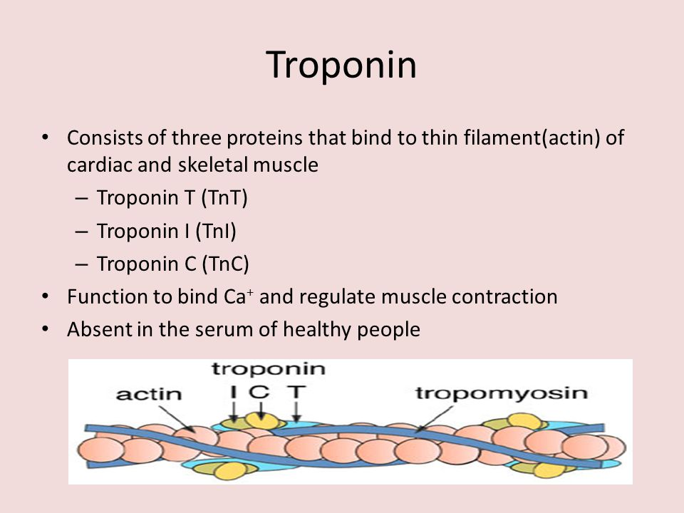 Troponin Consists of three proteins that bind to thin filament(actin) of cardiac and skeletal muscle.