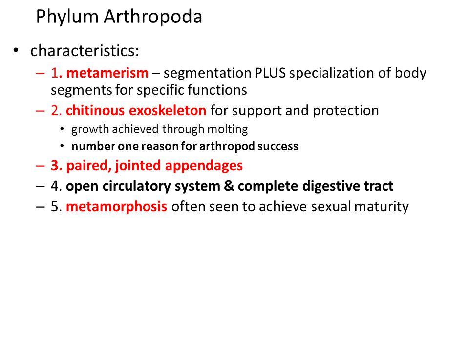 Phylum Arthropoda characteristics: