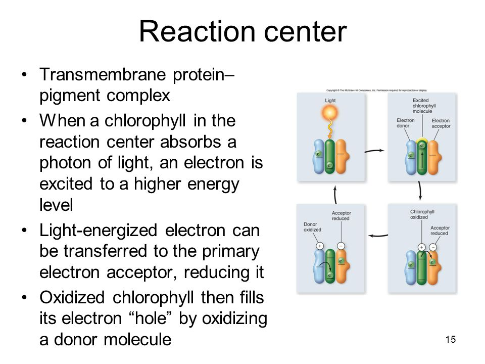 Reaction center Transmembrane protein–pigment complex
