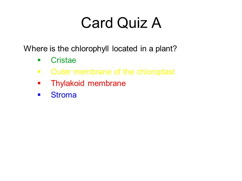 Card Quiz A Where is the chlorophyll located in a plant Cristae