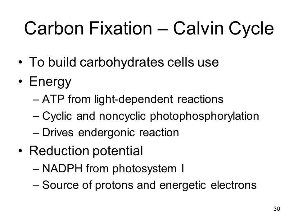 Carbon Fixation – Calvin Cycle