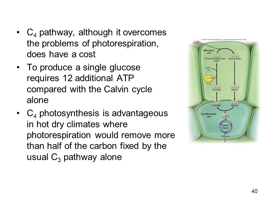 C4 pathway, although it overcomes the problems of photorespiration, does have a cost