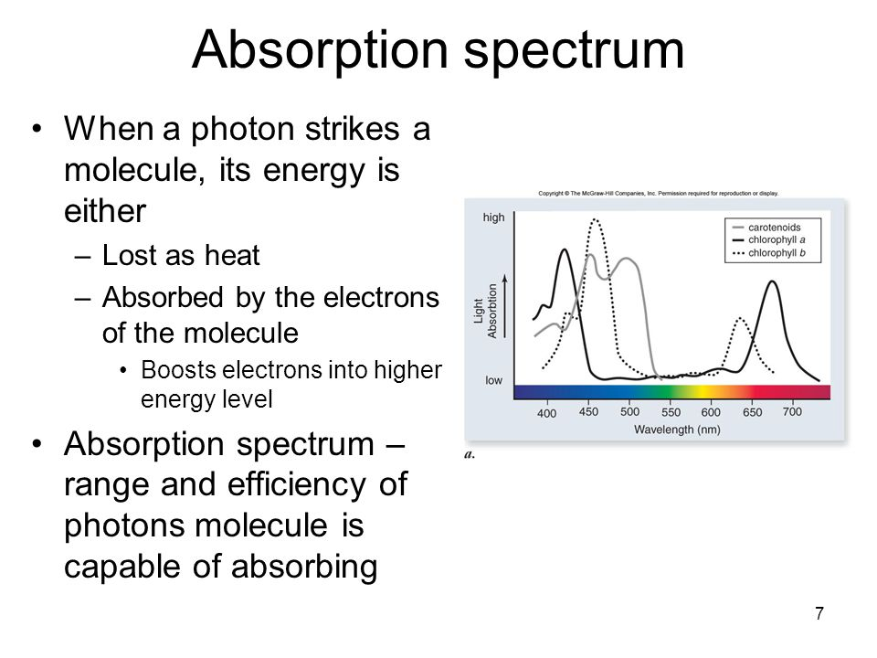 Absorption spectrum When a photon strikes a molecule, its energy is either. Lost as heat. Absorbed by the electrons of the molecule.