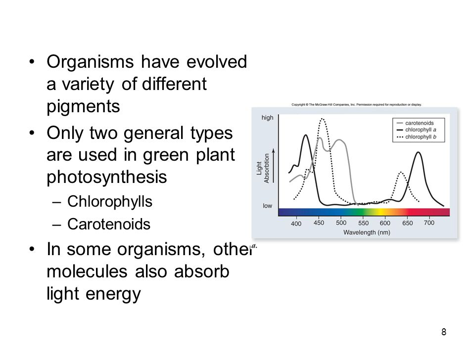Organisms have evolved a variety of different pigments