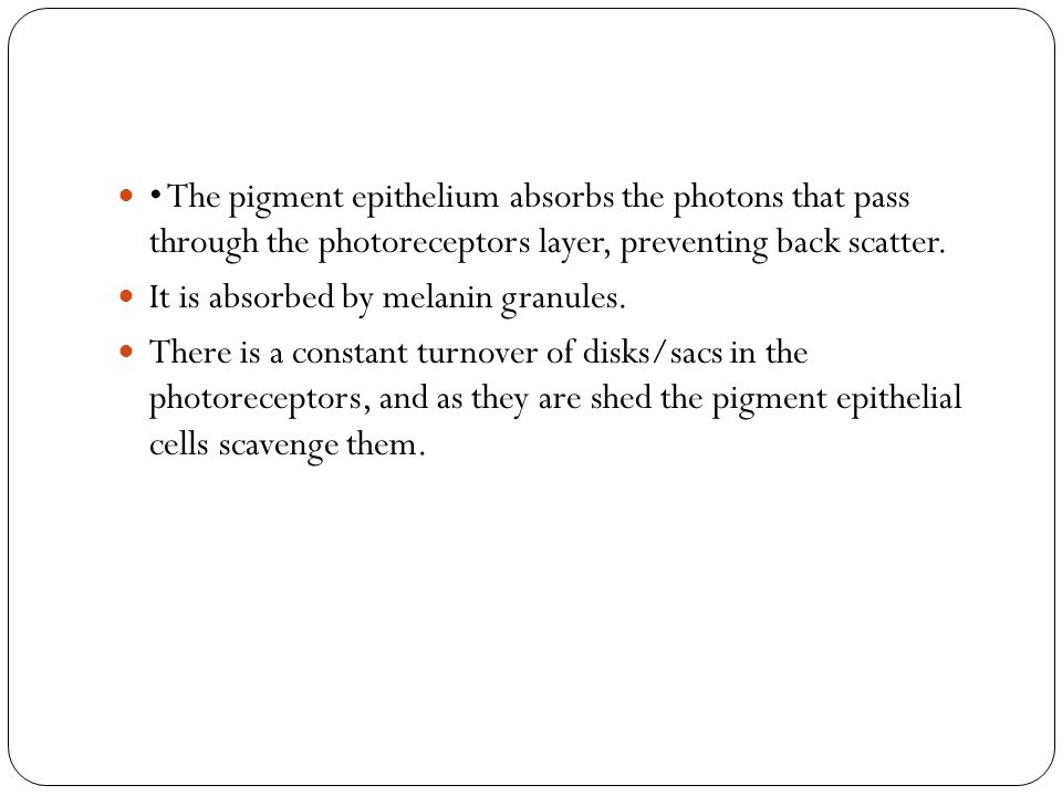 • The pigment epithelium absorbs the photons that pass through the photoreceptors layer, preventing back scatter.