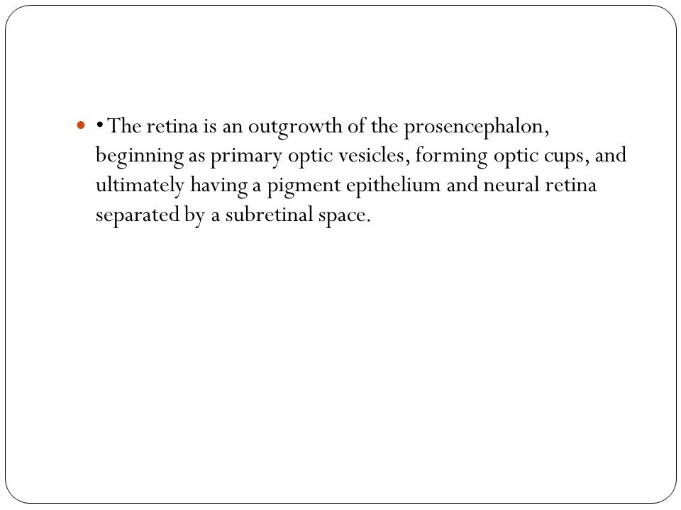 • The retina is an outgrowth of the prosencephalon, beginning as primary optic vesicles, forming optic cups, and ultimately having a pigment epithelium and neural retina separated by a subretinal space.