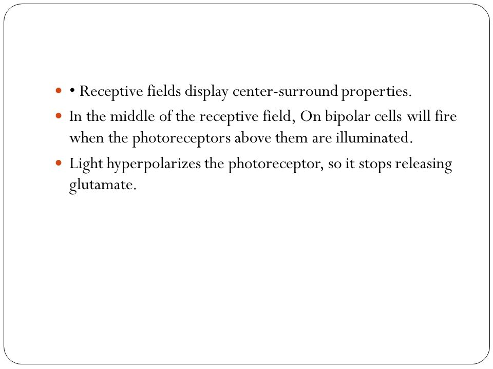 • Receptive fields display center-surround properties.