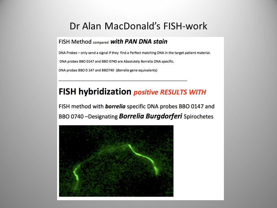 Dr Alan MacDonald's FISH-work