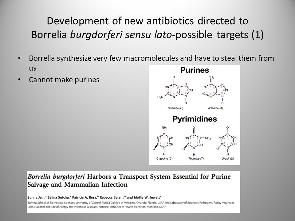 Development of new antibiotics directed to Borrelia burgdorferi sensu lato-possible targets (1)