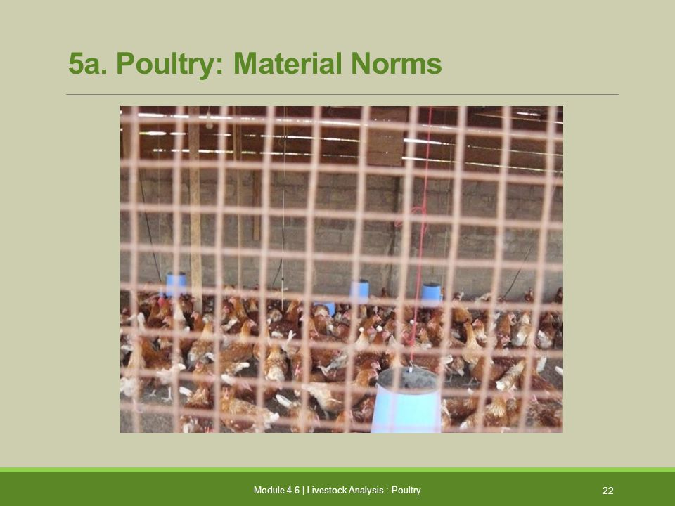 5a. Poultry: Material Norms